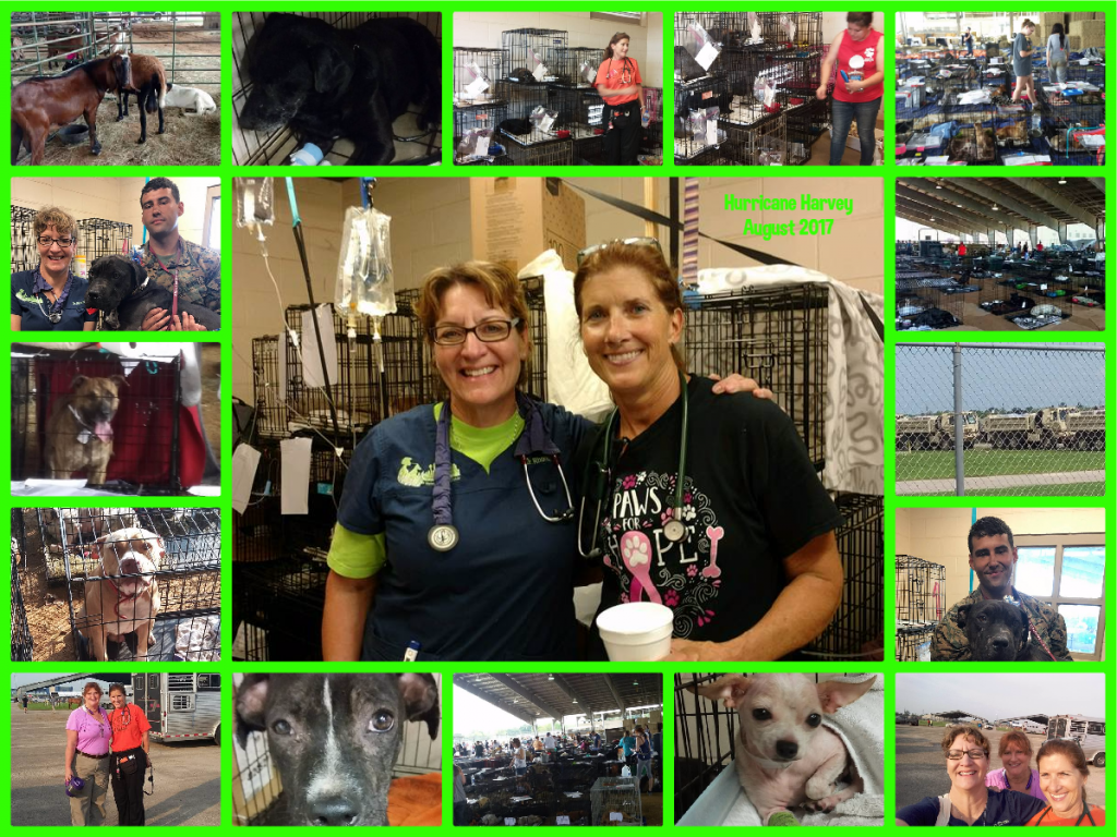 dr rhonda country friends vet clinic royse city